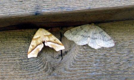 moth1_0.jpg