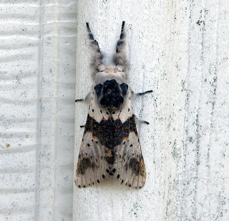 moth2_0.jpg