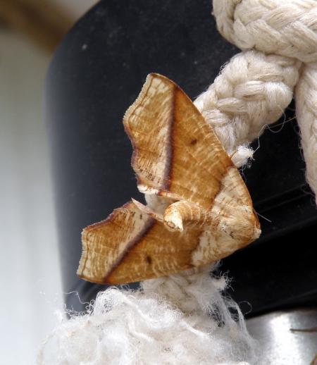 moth4_0.jpg