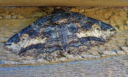 moth6.jpg