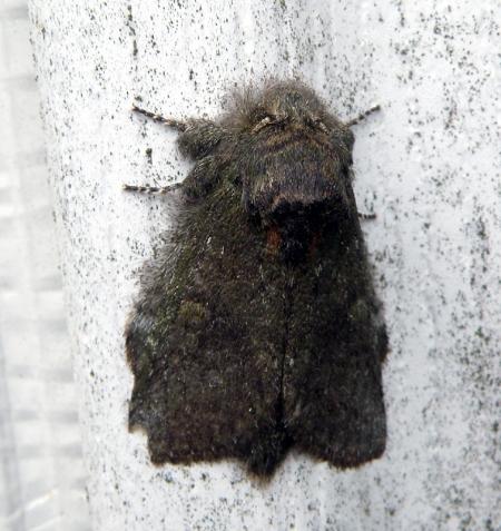 moth6_0.jpg