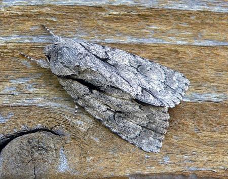 moth7.jpg