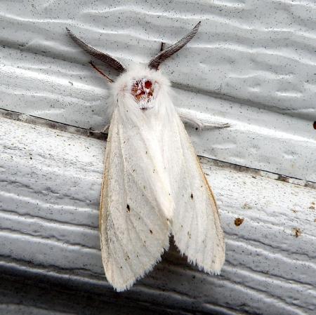 moth7_0.jpg