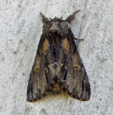 moth8.jpg