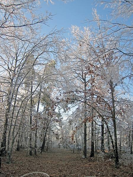 ice-trees-1