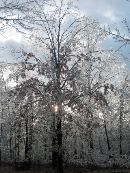 iced-tree