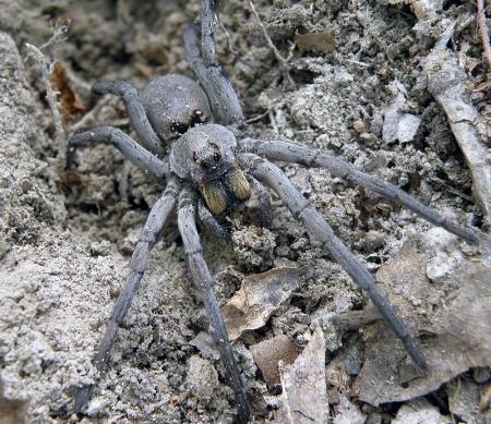 spider_02_800px