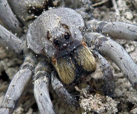 spider_03_800px
