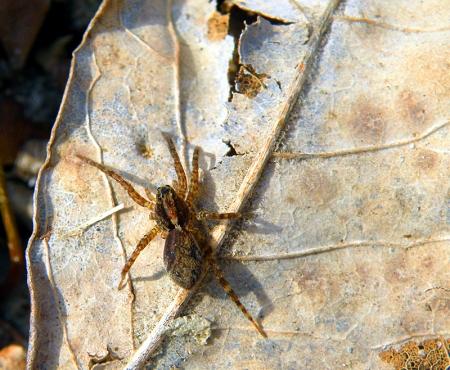 unk-spider-1.jpg