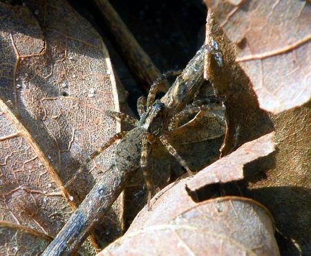 unk-spider-2.jpg